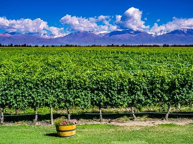 argentina Mendoza vineyards 565073467