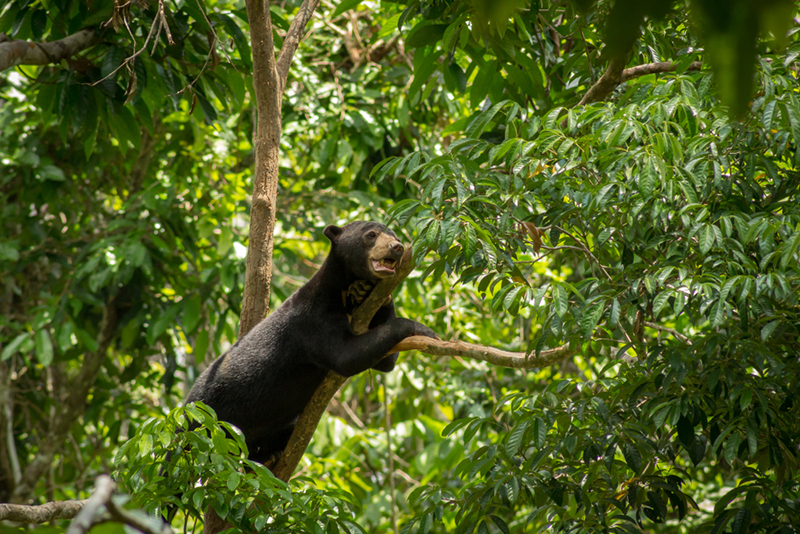 Sun Bear Conservation Centre | Borneo Group Tour | Howard Travel