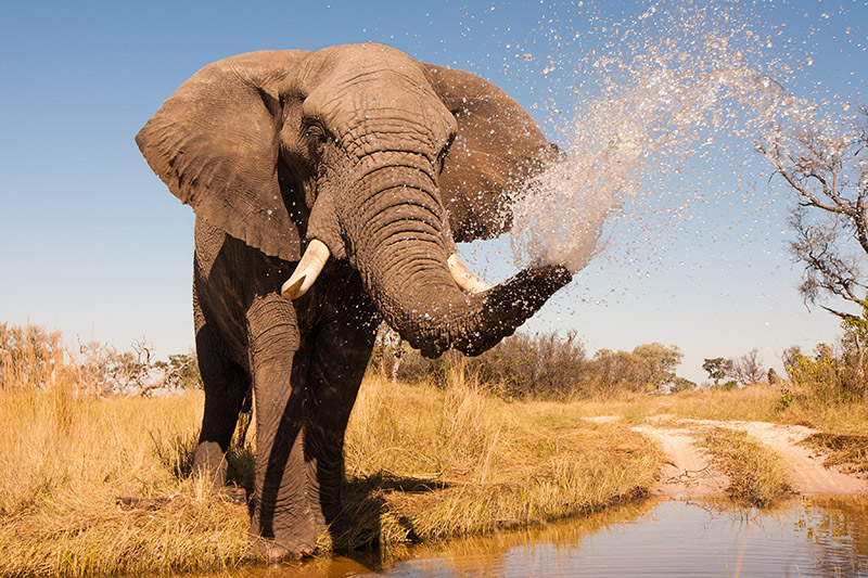 Elephant | Africa | Be Inspired | Howard Travel