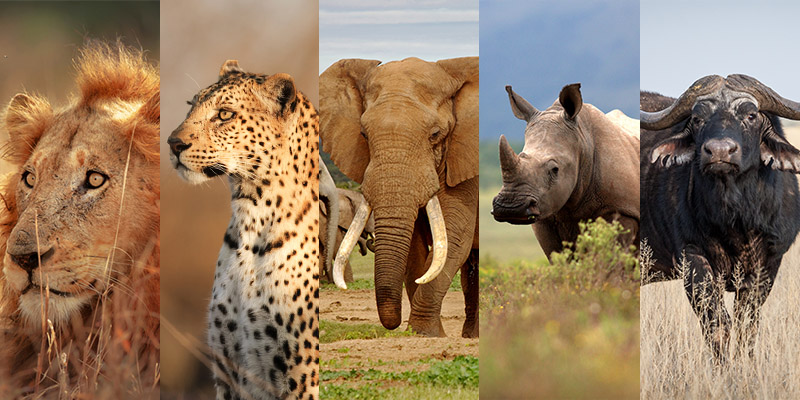 Big Five Safaris | Africa | Be Inspired | Howard Travel